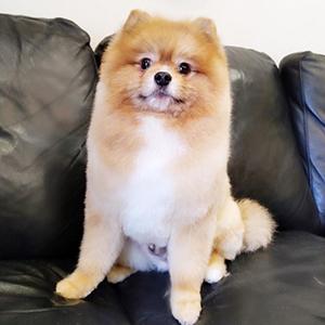 Стрижка собак, груминг