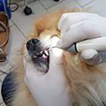 Чистка зубов собаке ультразвуком без наркоза